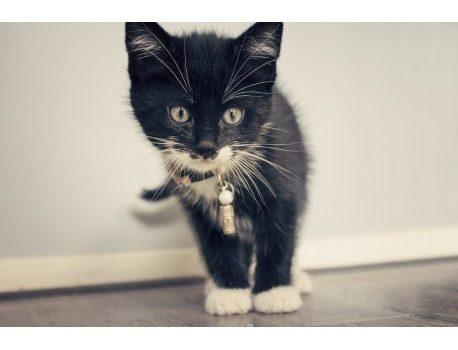 comment faire le deuil de son chat et adopter un nouveau chaton ?